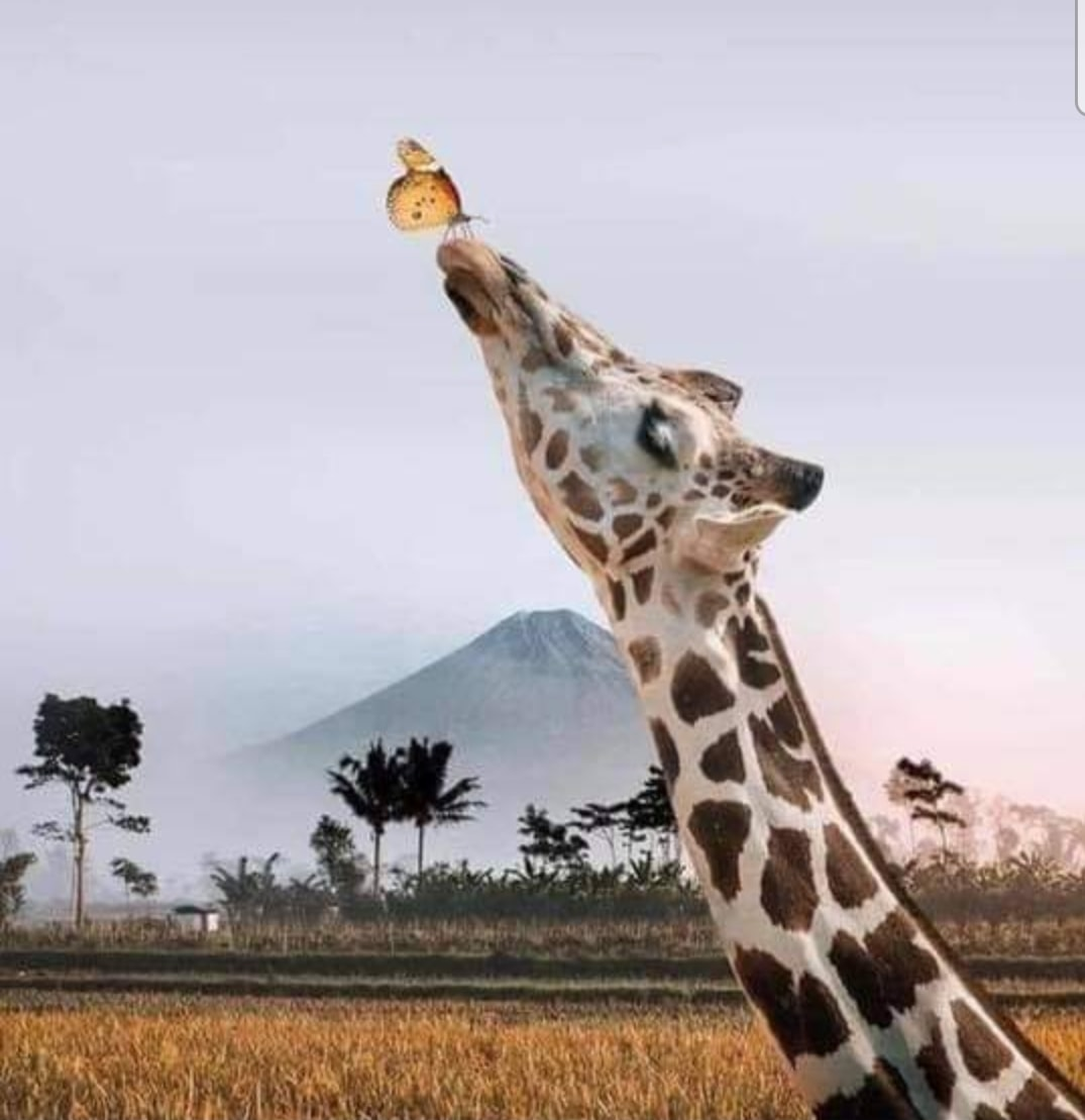 The Butterfly and the Giraffe